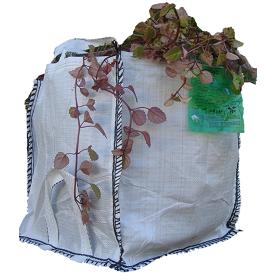 Big Bag Pequeño con Plantas 2