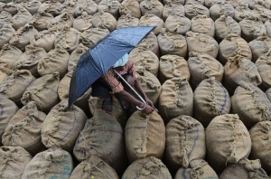 TOPSHOTS Indian farmer Mekhala Anjaneyulu seals wet bags of unpolished rice to be dried after unseasonal overnight rains soaked the area at the Agriculture Market Yard at Jangaon Mandal of Warangal District, about 85 kms from Hyderabad, on May 9, 2014. Some 2.1 million tonness of rice were soaked in the unexpected rainfall causing severe problems for farmers selling their grain. AFP PHOTO / Noah SEELAMNOAH SEELAM/AFP/Getty Images
