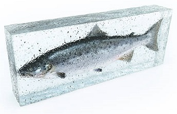 Pescado congelado 2