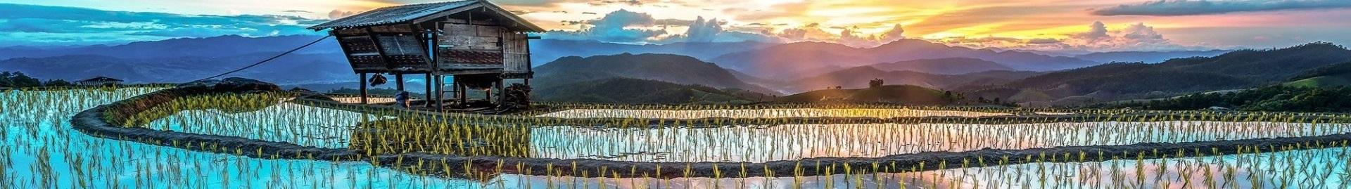 Plantacion de arroz en Asia 1 - Panoramica