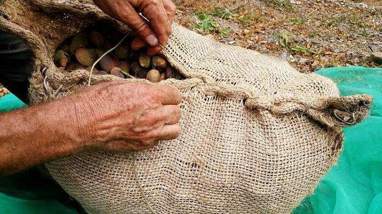 Saco de Yute de Recoleccion de Almendra - Small